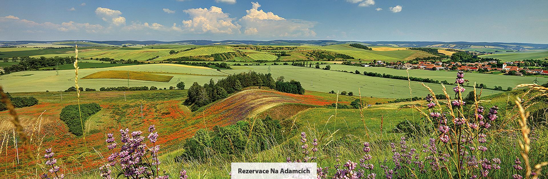 Rezervace Na Adamcích, zdroj: Libor Sváček, archiv Vydavatelství MCU